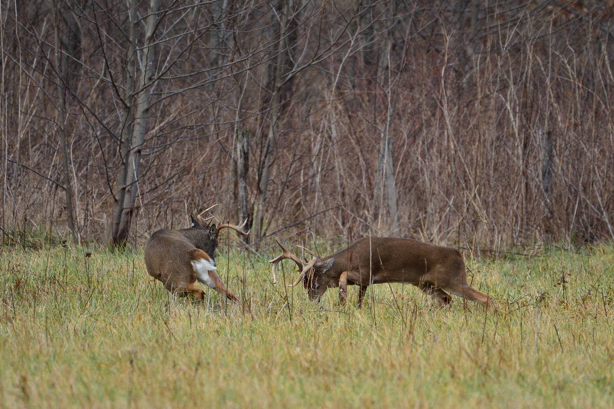 Whitetail Hunts 2